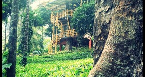 Jungle Jive Tree House